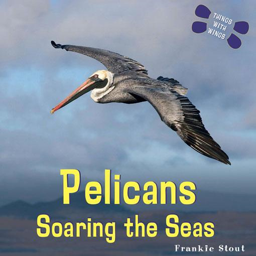 Pelicans: Soaring the Seas