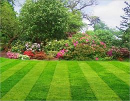 Master Your Lawn: The Essential Lawn Care Guide For Beginners