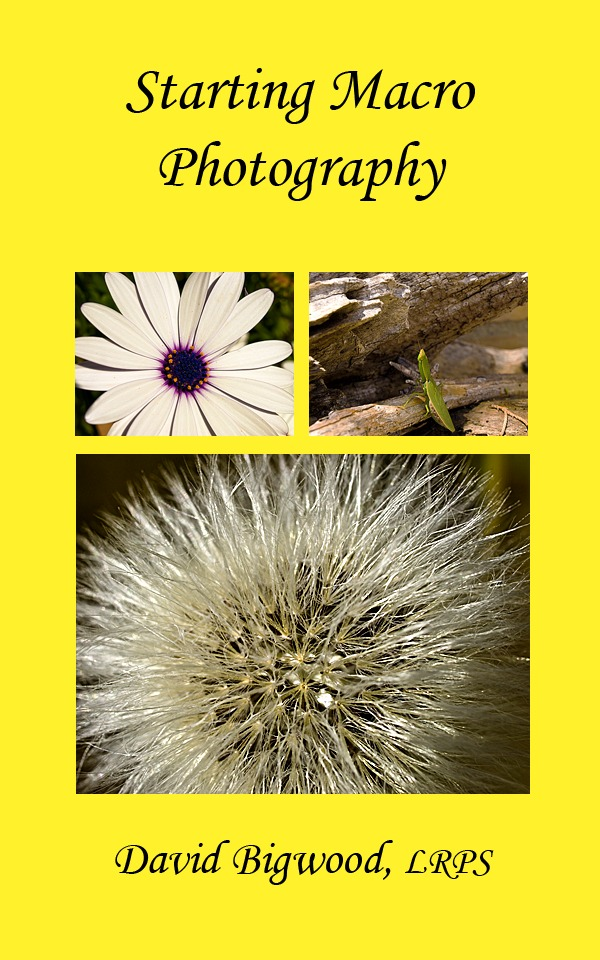 Starting Macro Photography By: David Bigwood