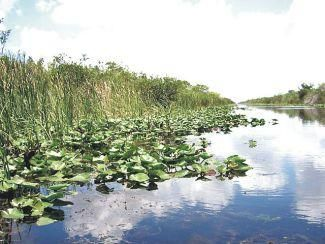 Florida's Everglades National Park