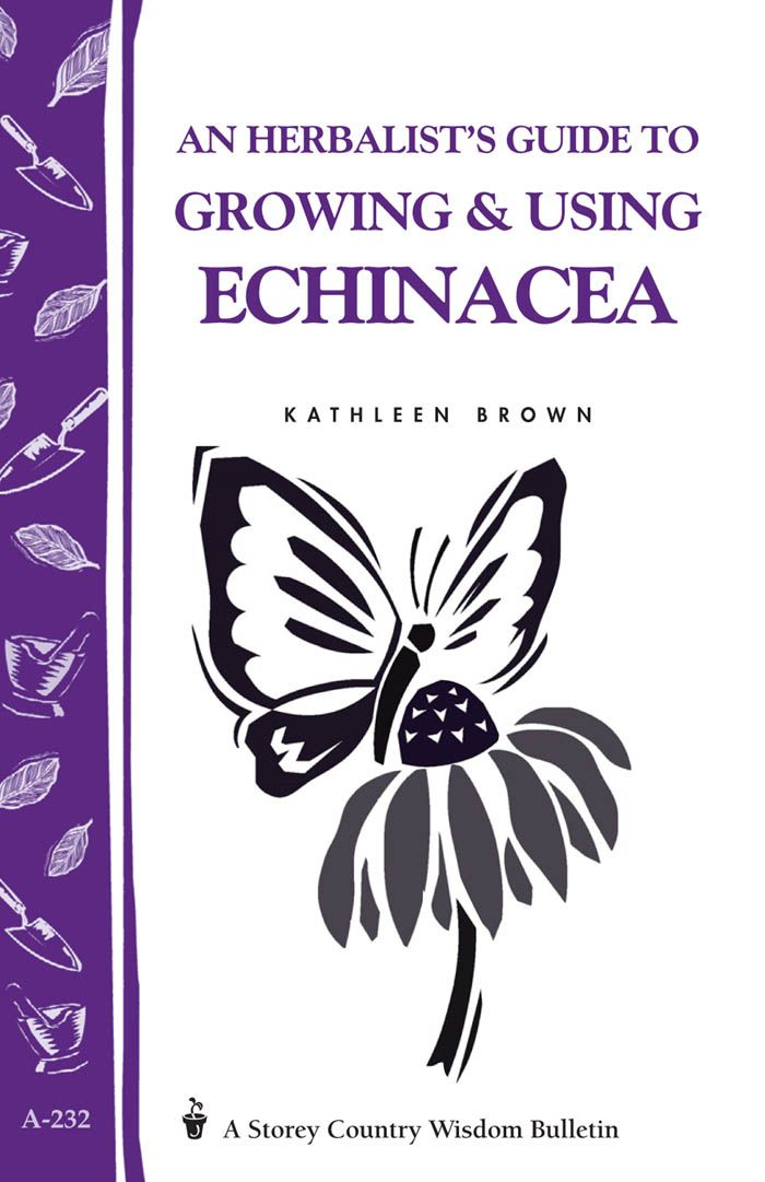 An Herbalist's Guide to Growing & Using Echinacea