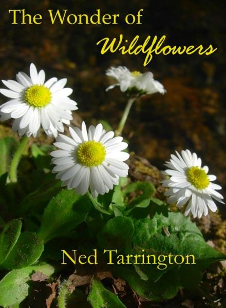 The Wonder of Wildflowers