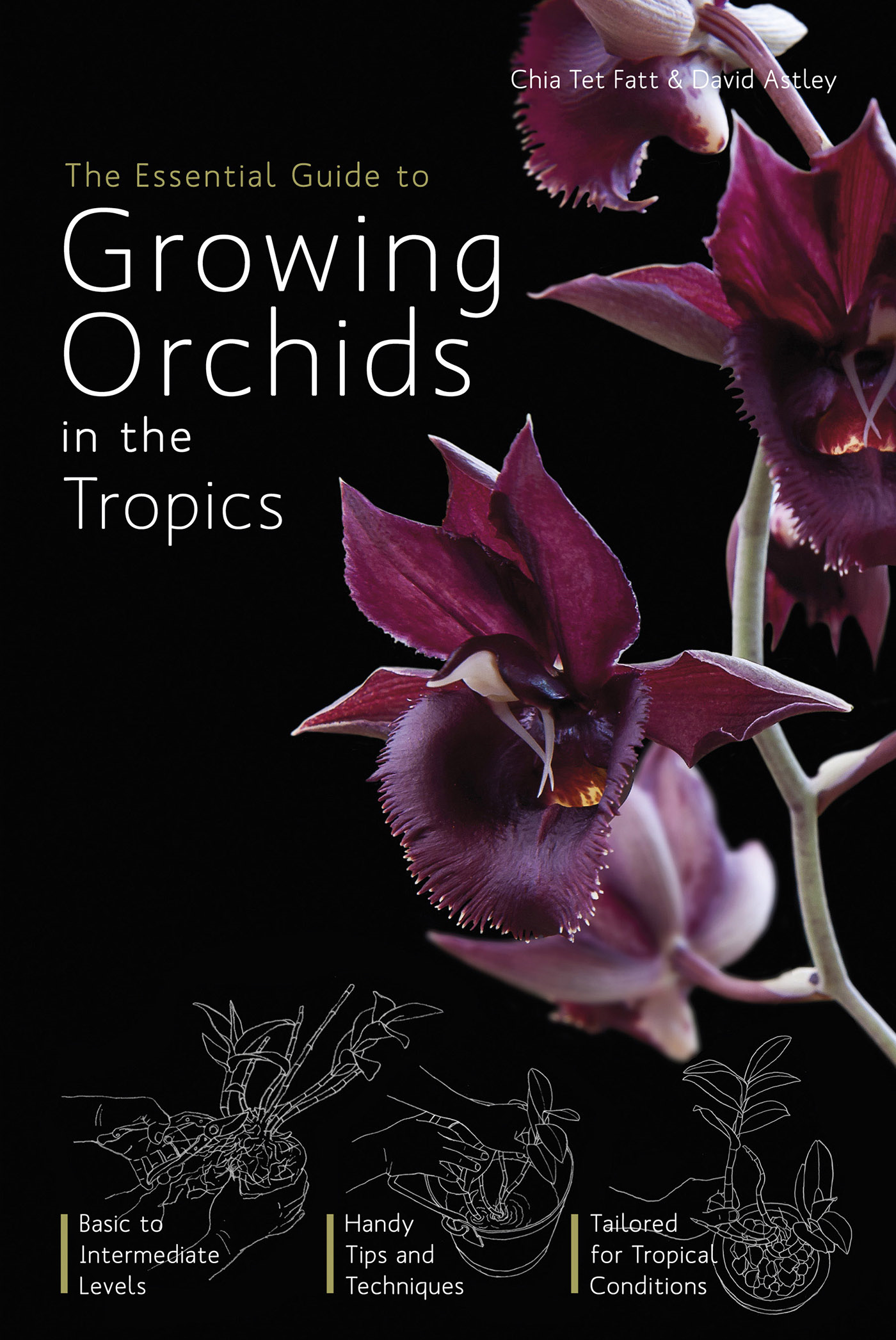 The Essential Guide to Growing Orchids