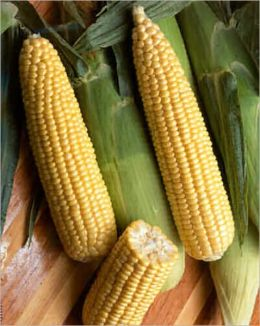 A Crash Course on How to Grow Sweet Corn