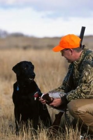 Training a Hunting Dog For Beginners