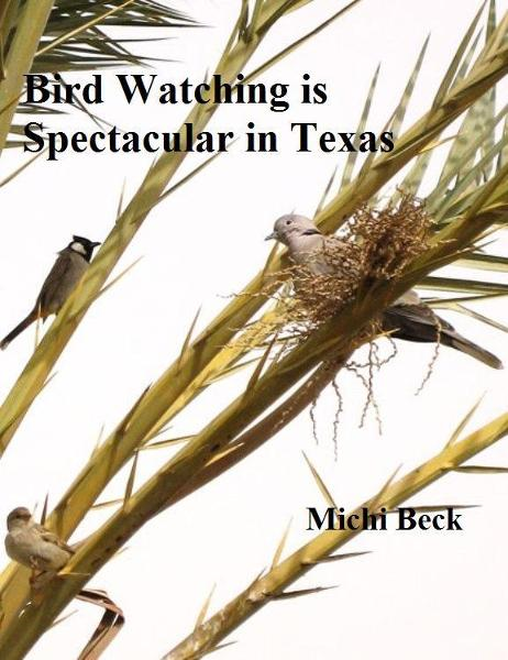 Bird Watching is Spectacular in Texas