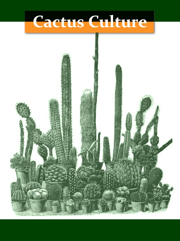 Cactus Culture for Amateurs [Illustrated]