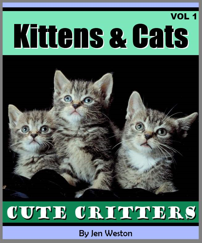 Kittens & Cats - Volume 1