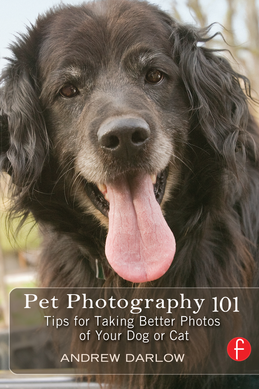 Pet Photography 101 Tips for taking better photos of your dog or cat