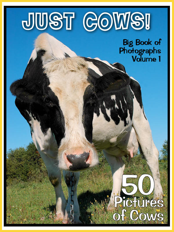 50 Pictures: Just Cows! Big Book of Bovine Photographs, Vol. 1