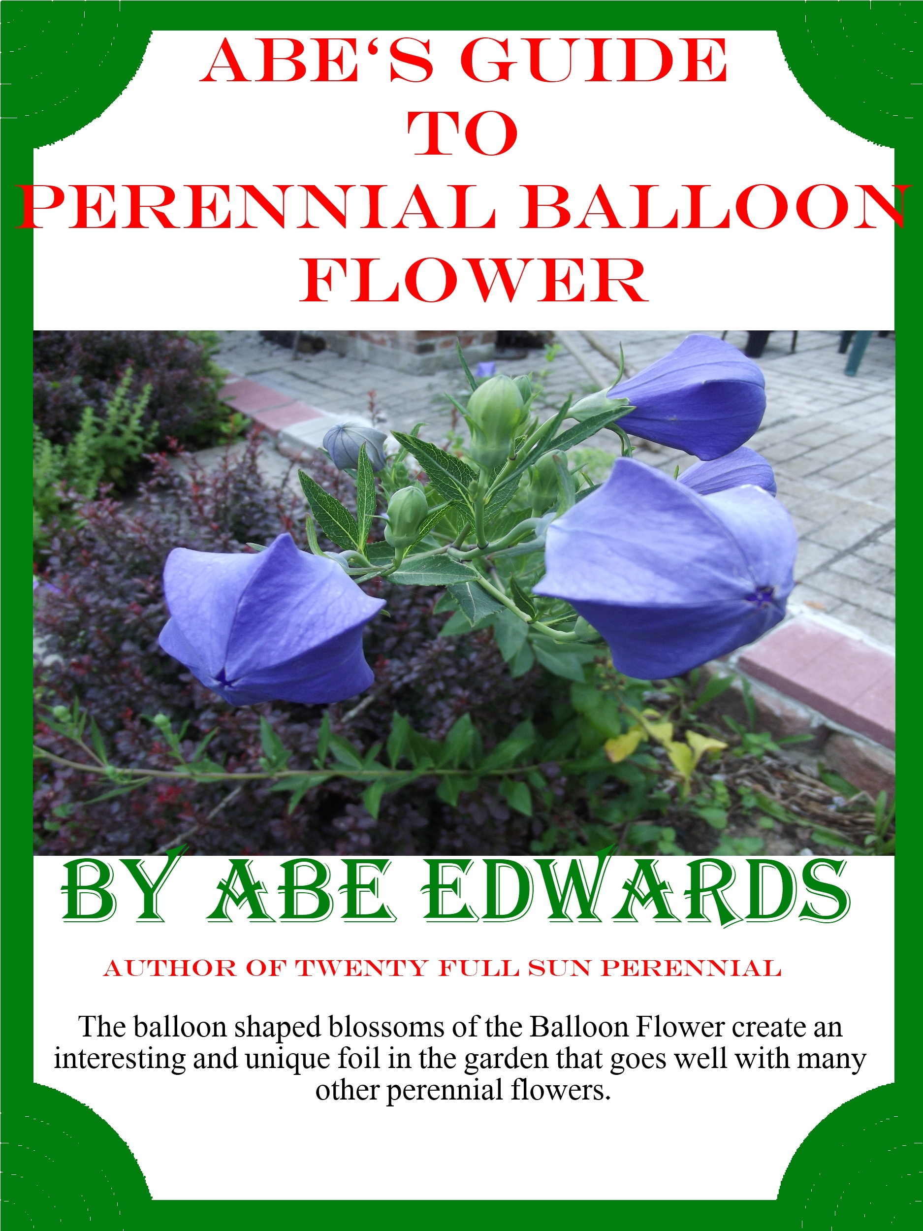 Abe's Guide to Perennial Balloon Flower