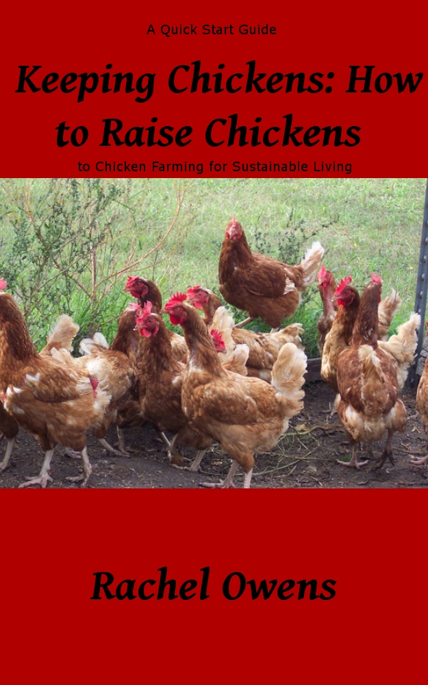 Keeping Chickens: How to Raise Chickens