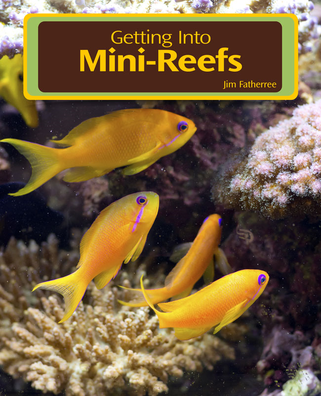 Getting Into Mini Reefs