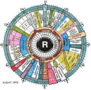An Informative Guide About Iridology By: Edward Lyle