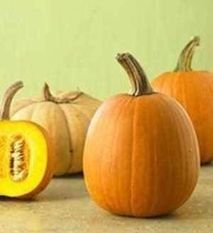 Growing Pumpkins For Beginners