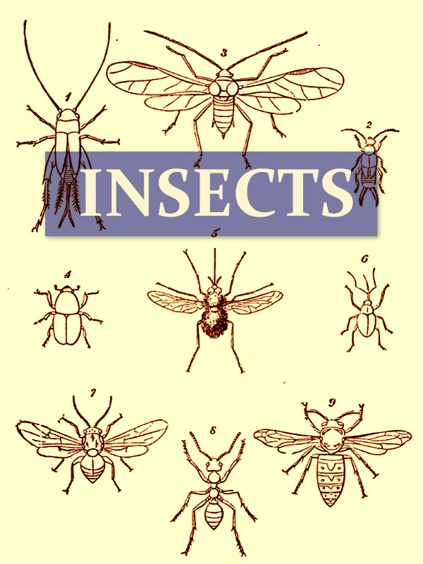 On the Origin and Metamorphoses of Insects [Illustrated]
