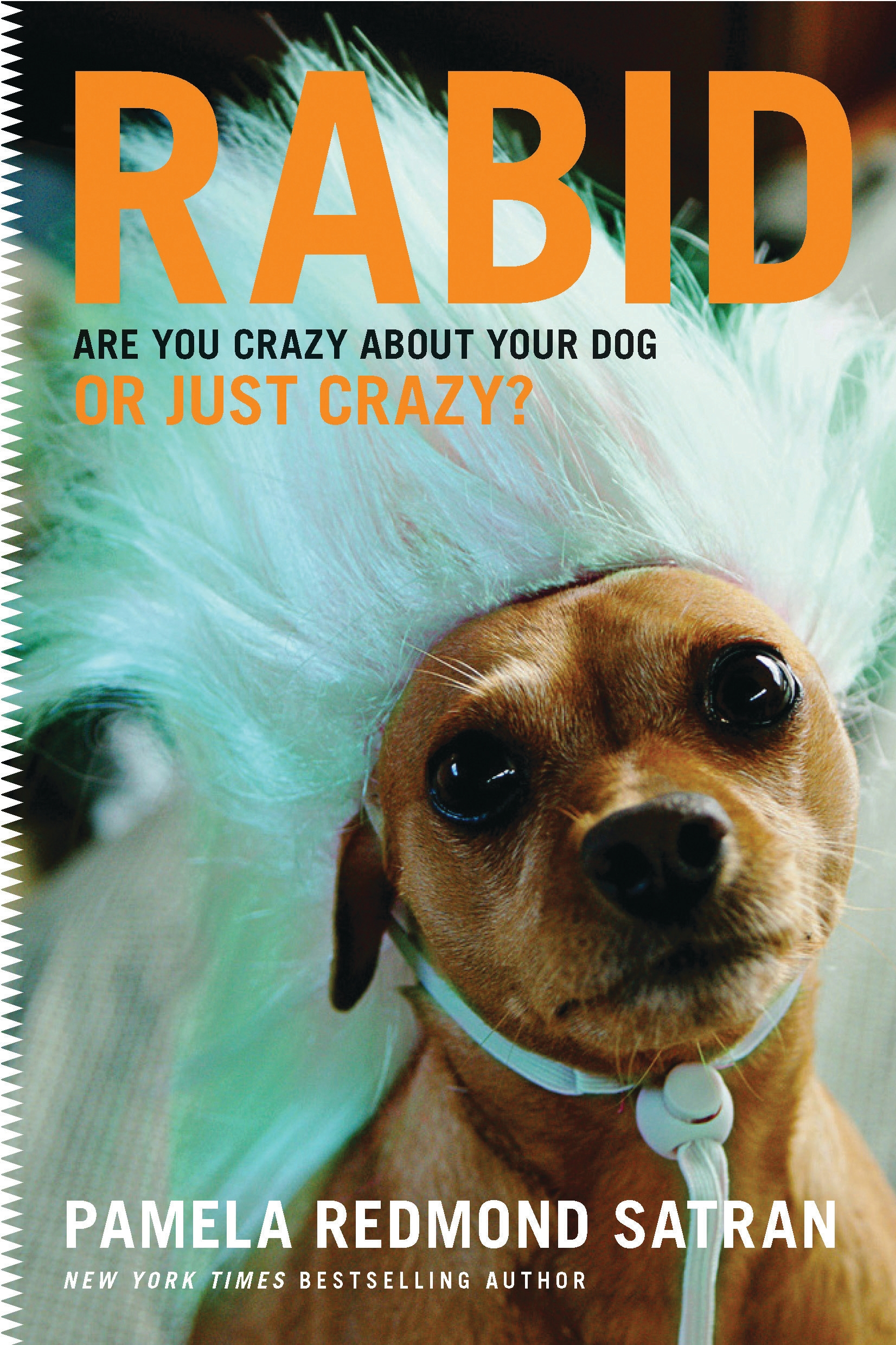 Rabid Are You Crazy About Your Dog or Just Crazy?