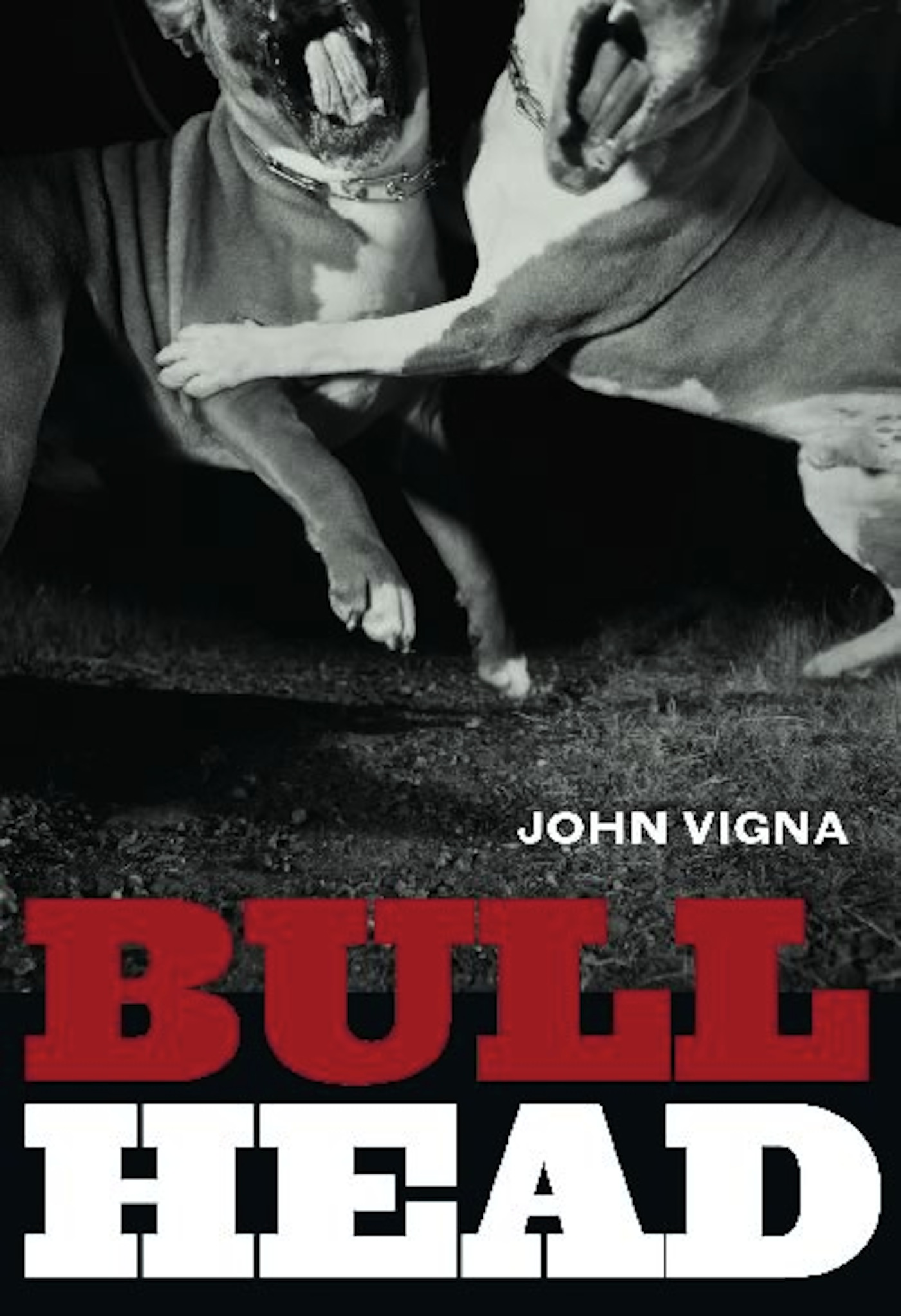 Bull Head By: John Vigna