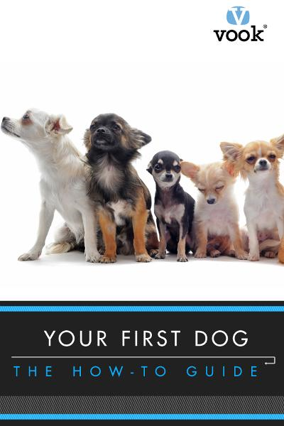 Your First Dog: The How-To Guide