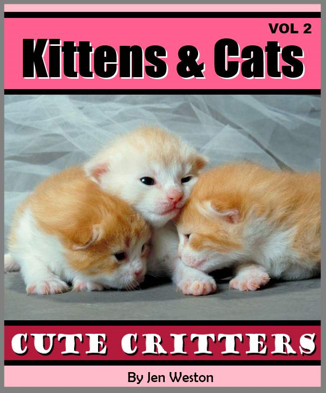 Kittens & Cats - Volume 2