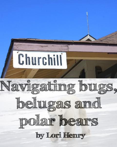 Churchill: Navigating bugs, belugas and polar bears