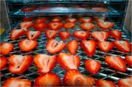 A Beginners Guide to Dehydrating Fruit