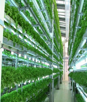 The Essential Guide to Hydroponics For Beginners