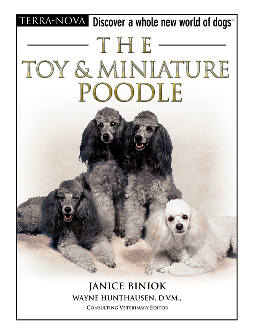The Toy & Miniature Poodle