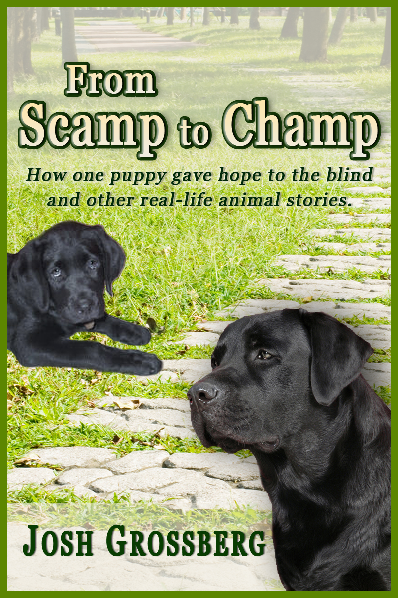 From Scamp to Champ: How one puppy gave hope to the blind and other real-life animal stories