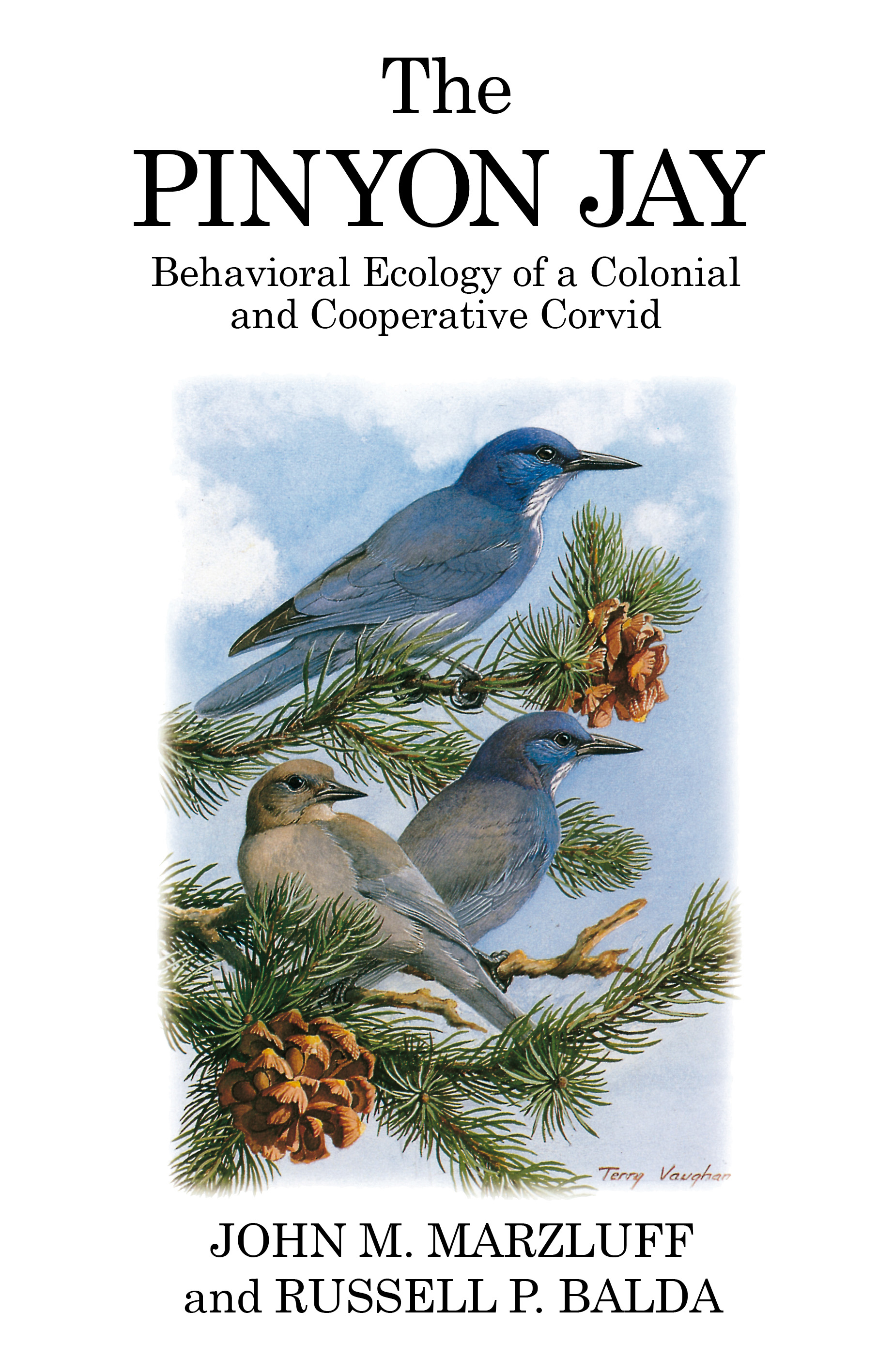 The Pinyon Jay Behavioral ecology of a colonial and cooperative corvid