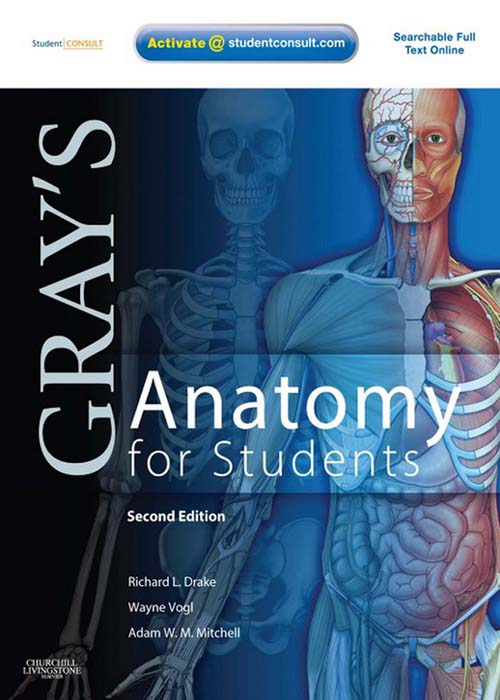 Gray's Anatomy for Students By: A. Wayne Vogl,Adam W. M. Mitchell,Richard Drake