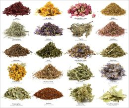 A Beginners Guide to Culinary Herbs