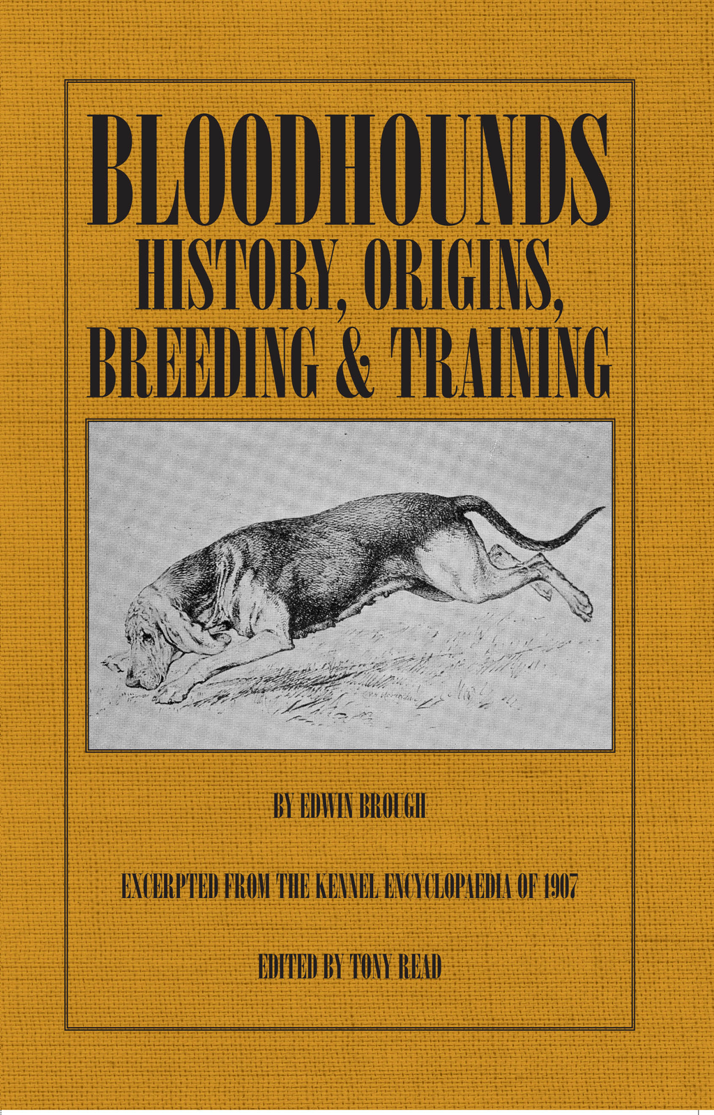 Bloodhounds: History - Origins - Breeding - Training