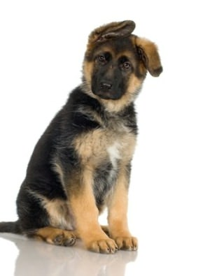 German Shepherd Training For Beginners By: Geraldine Pettiford