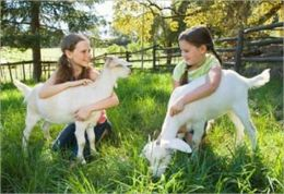 A Beginners Guide to Raising Goats