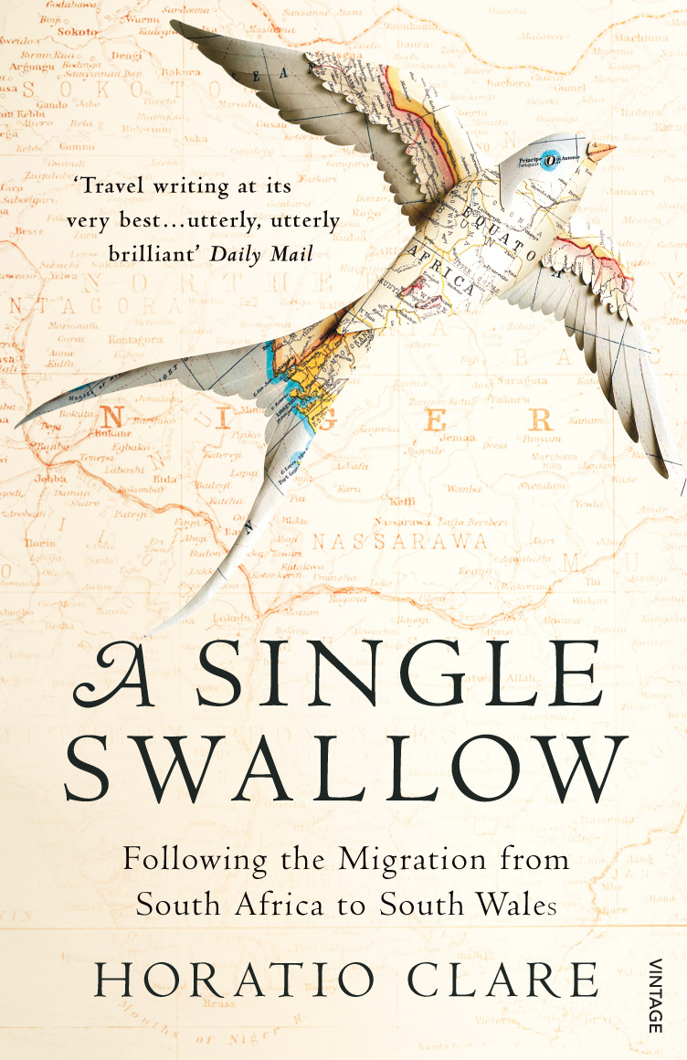 A Single Swallow Following An Epic Journey From South Africa To South Wales