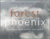 Forest Phoenix: How a Great Forest Recovers After Wildfire