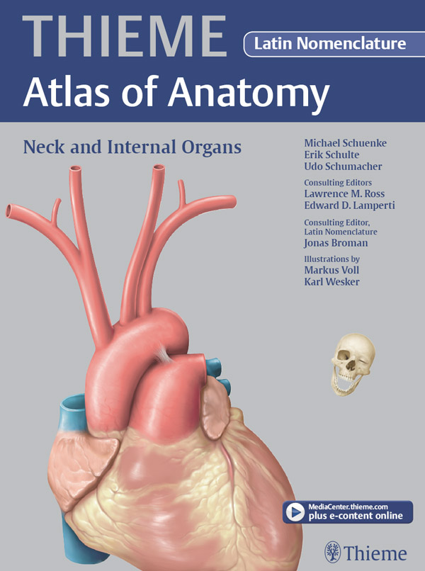 Neck and Internal Organs - Latin Nomencl. (THIEME