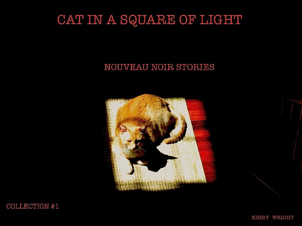 CAT IN A SQUARE OF LIGHT