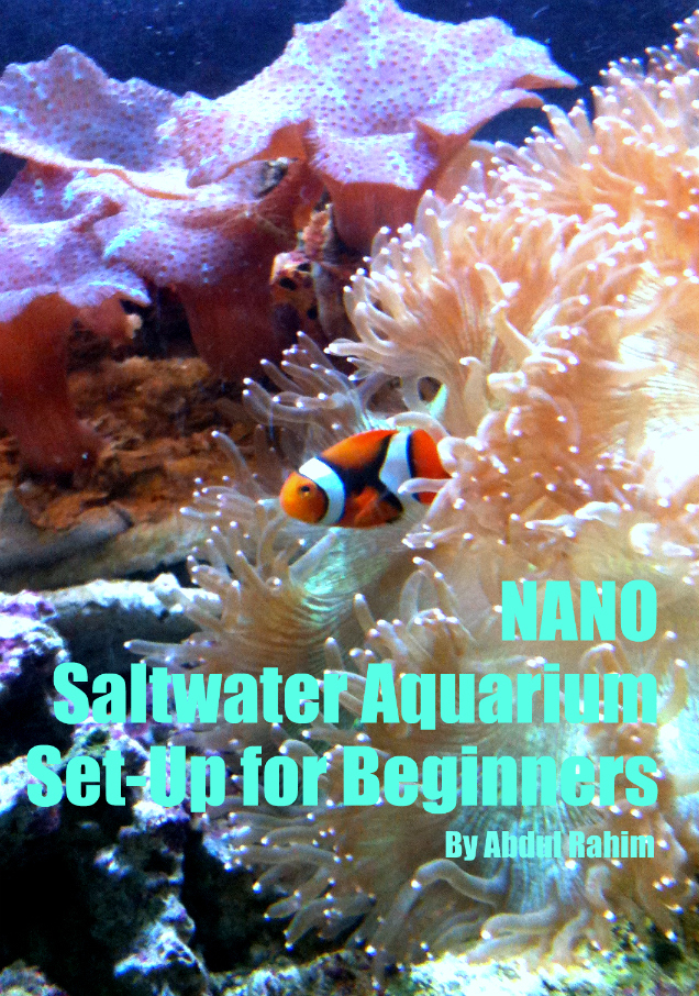 Nano Saltwater Aquarium Set Up for Beginners!