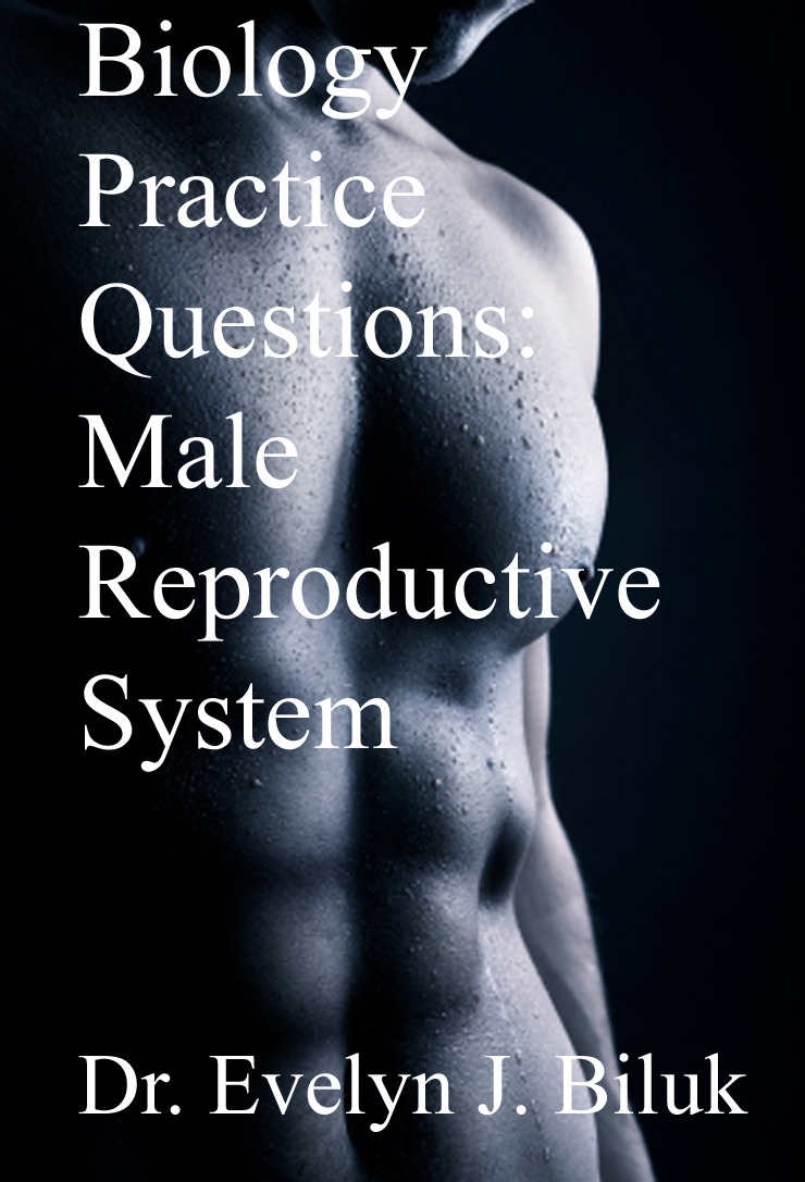 Biology Practice Questions: Male Reproductive System