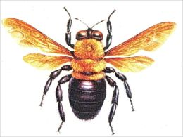 A Crash Course on How to Get Rid of Carpenter Bees By: Winston Thomas