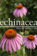 online magazine -  Echinacea - Natural Herbal Care