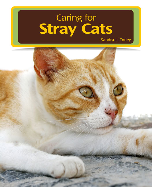 Caring for Stray Cats