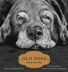 Old Dogs Are the Best Dogs