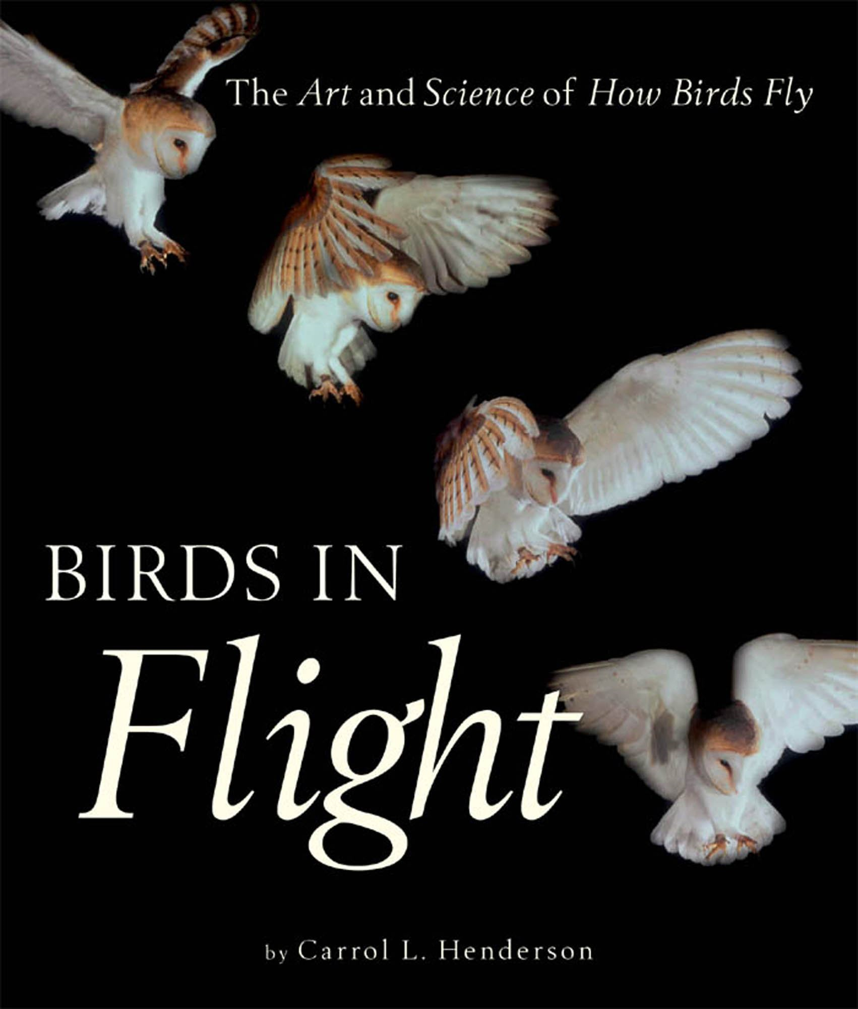 Birds in Flight: The Art and Science of How Birds Fly