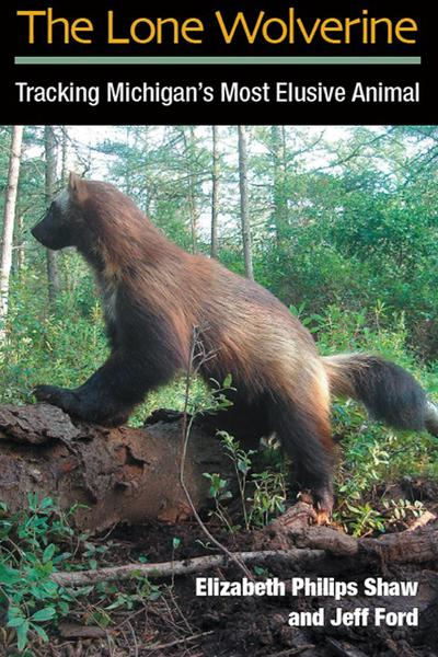 The Lone Wolverine: Tracking Michigan's Most Elusive Animal