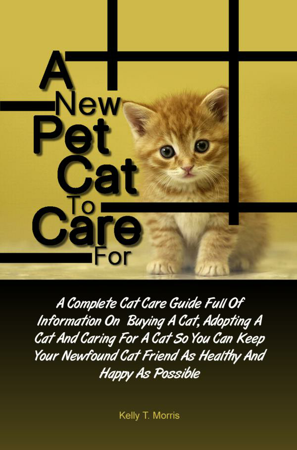A New Pet Cat To Care For