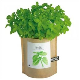 A Crash Course on How to Grow Basil