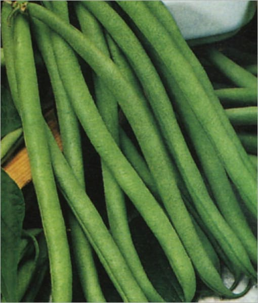 A Crash Course on How to Grow Pole Beans